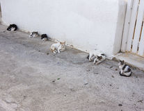 Six cats relaxing in a street in Mykonos Royalty Free Stock Photos