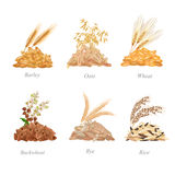 Six cereals batches with their plants near it royalty free illustration