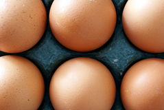 Six Chicken Eggs. Neatly packed Royalty Free Stock Photo