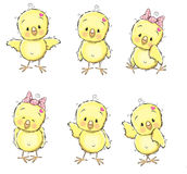 Six chicks Royalty Free Stock Images