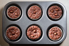 Six chocolate muffins Stock Image