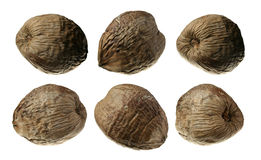 Six Coconuts Collection Isolated on White Royalty Free Stock Photography