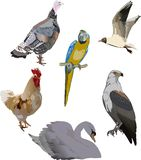 Six color birds collection Stock Photography