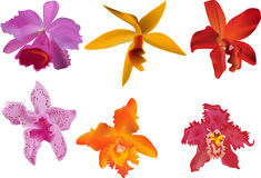 Six color orchid on white Royalty Free Stock Photos