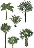 Six color palm trees Royalty Free Stock Photos