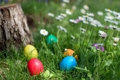 Easter eggs in a garden royalty free stock photos