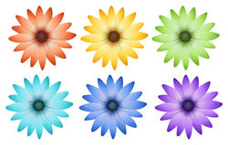 Six colorful flowers Stock Photo