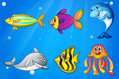 Six colorful smiling fishes under the sea Royalty Free Stock Photography