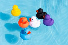 Six colourful rubber ducks, a family of ducks. Yellow, blue, purple, black, white and orange, swimming in the water in a paddling pool stock photography