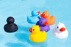 Six colourful rubber ducks, a family of ducks. Yellow, blue, purple, black, white and orange, swimming in the water in a paddling pool royalty free stock image