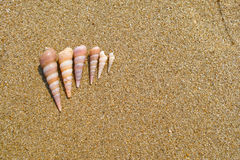 Six conches Stock Photography