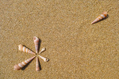 Seven conches Stock Images