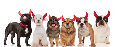 Six cute dogs wearing devil horns for halloween. Six cute dogs of different breeds wearing devil horns for halloween while standing, sitting and lying on white Stock Photo