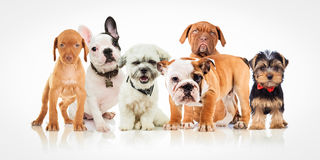 Six Cute Puppy Dogs Of Different Breeds Standing Together Stock Photos