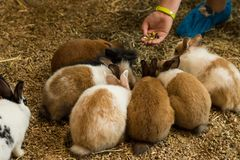 Rabbits sitting in a circle and taking food from hand. Six cute rabbits sitting in a circle and taking food from hand royalty free stock images