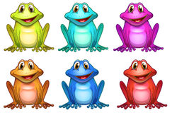 Six different colors of frogs Stock Images