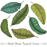 Six different hand drawn vector banana leaves,  on white tropical drawing Stock Photography