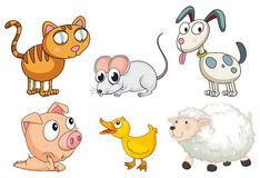 Six different kinds of animals Royalty Free Stock Photography