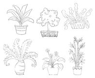 Six different kinds of plants Royalty Free Stock Photo