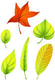 Six different leaves Stock Photos