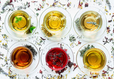Six different types of tea. Six cups with different types of tea black, green, hibiscus, chamomile, peppermint, lavender on white background of scattered tea stock photo