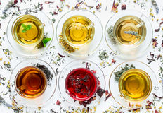 Six different types of tea prepared in the cups. Six cups with different types of tea black, green, hibiscus, chamomile, peppermint, lavender on white stock photos