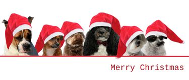 Dogs with red santa claus hats stock image