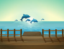 Six dolphins diving Stock Photography