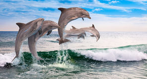 Six dolphins jumps ocean. Six dolphins jumping together in the ocean waves Stock Images