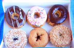 Six donuts in a card board box container Stock Image