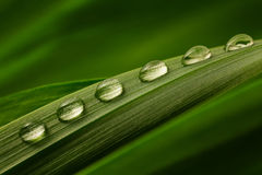 Six drops of water on a green leaf Stock Photos