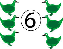 SIX DUCK Royalty Free Stock Images