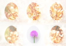 Six Easter egg with flower Stock Photos