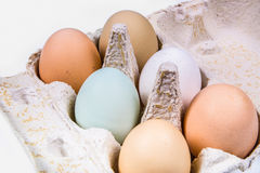 Six eggs in different colors and sizes in an egg carton. Close-up of six eggs in different colors and sizes in an egg carton on a white background Royalty Free Stock Image