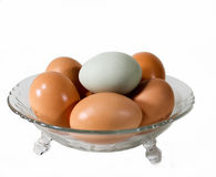 Six Eggs In a Glass Bowl. Five brown eggs and one green eggs in a glass bowl isolated against a white background Stock Images