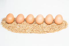 Six eggs with husk Royalty Free Stock Images
