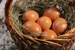 Six eggs lying on a hay in a basket. royalty free stock photo