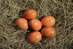 Six eggs lying on a hay. Easter or village theme. stock photos