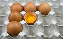 Six eggs in paper tray Stock Image