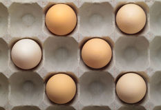 Six eggs in a tray Stock Photos