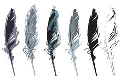 Six feathers isolated on white background Royalty Free Stock Photos