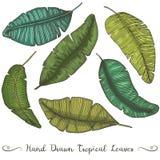 Six feuilles tirées par la main différentes de banane de vecteur, sur le dessin tropical blanc Photographie stock
