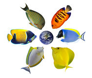 Six fishes around the globe Royalty Free Stock Image
