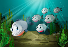 Six fishes with big fangs under the sea. Illustration of the six fishes with big fangs under the sea Stock Photos