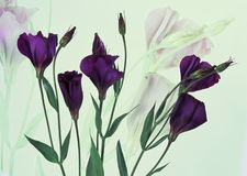 Six fleurs pourprées sur un fond blanc Images stock