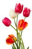 Six flowers Royalty Free Stock Photo