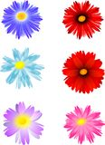 Six flowers Royalty Free Stock Images