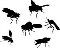 Six fly silhouettes Royalty Free Stock Images