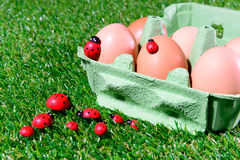 Six fresh eggs in a box Stock Images