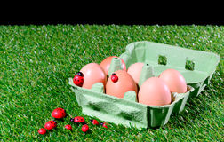 Six fresh eggs in a box Royalty Free Stock Images